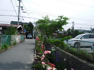 Matsu33
