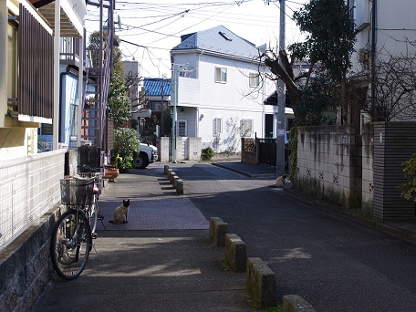 Fuji5