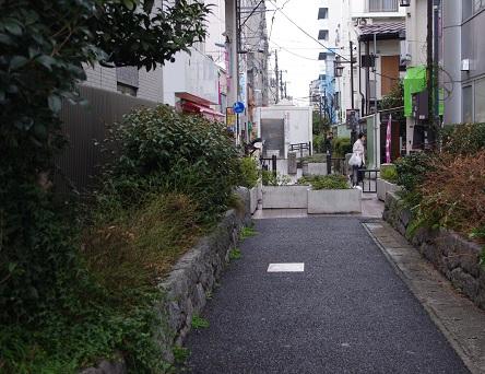 Yokogi9